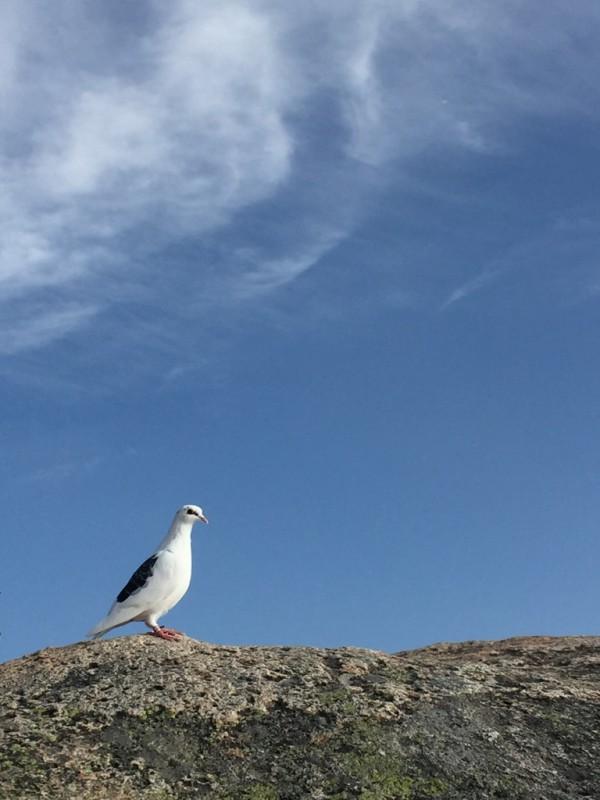 山頂でご一緒した小林さん(左足首にタグが付いていました)、たたずまいが孤高な感じでカッコよかったです。