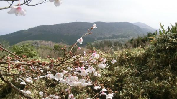 山頂から戸田峠へ下る道から達磨山を望む。