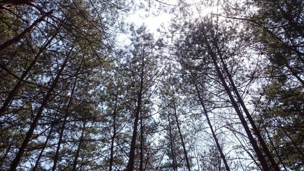 里山の静けさ、木々のしなる音、鳥のさえずり、土のにおい…感じながら下ります