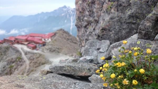 険しい環境下で咲く花