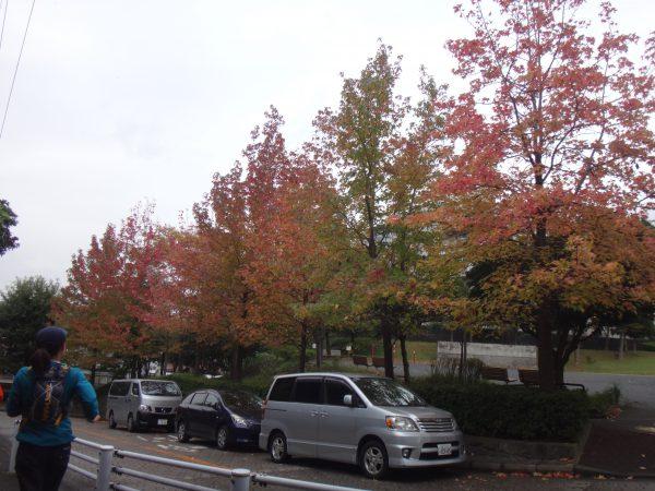 途中市街地に一度出てきます。紅葉が綺麗でした。