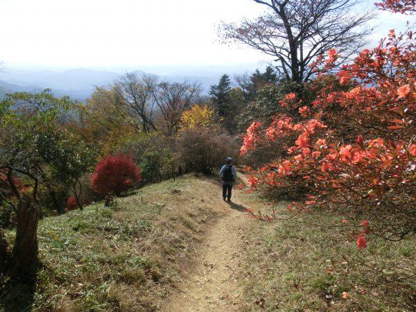 山頂直下でもツツジが満開!左の紅葉はドウダンツツジ