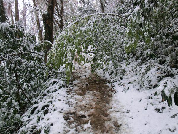 1号路合流までに3人の登山者とすれちがうが、雪の重みで木が道を何ヶ所もふさいでいた。