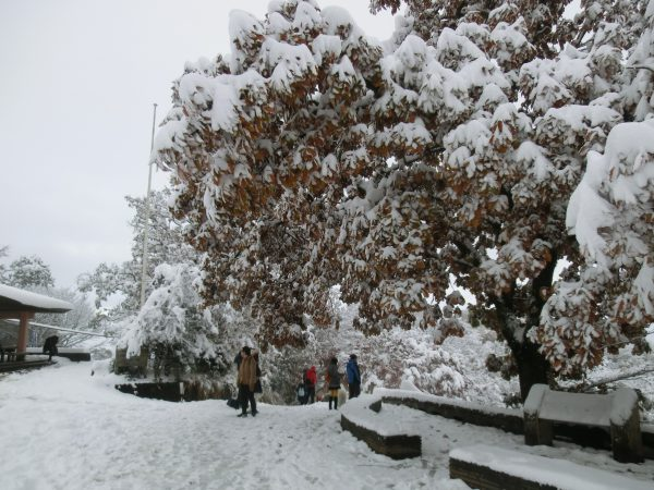 13時30分山頂着。20~30cm程の積雪。柏の枯葉に雪がどっさり積もっていますね。