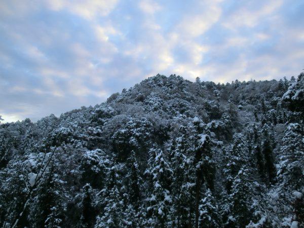 1号路を下山しましたが、凍結防止剤が撒かれていたので、滑る事はありませんでした。写真は1号路途中から高尾山方面をパチリ。