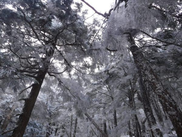 冬の森は綺麗