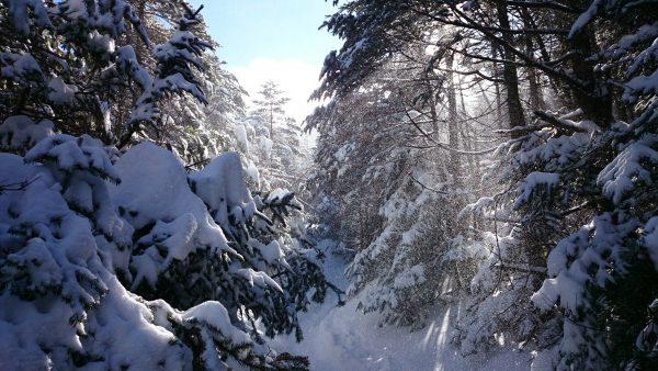 樹から落ちる雪がキラキラして綺麗です。